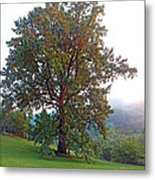 Summer Poplar Tree Filtered Metal Print