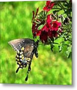 Summer Refreshment Metal Print