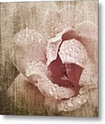 Summer Rose #1 Metal Print