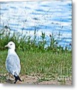 Summer Sea Gull Metal Print