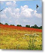 Summer Spectacular - Red Kites Over Poppy Fields Metal Print