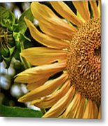 Summer Splendor Metal Print