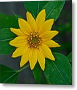 Summer Sun Metal Print by Elmer Baez