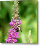 Summer Time And The Feeding Is Easy Metal Print