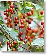 Summer Wild Berries Metal Print