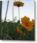 Summer Wild Flowers Metal Print