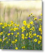 Summer Wildflowers On The Rim  Metal Print
