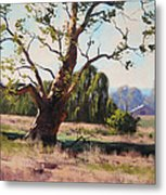 Summer Willow Metal Print by Graham Gercken