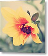 Summer Yellow Metal Print