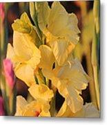 Summer Yellow Gladiolus Metal Print