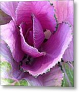 Summer's Cabbage Patch Metal Print