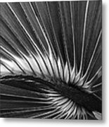 Summers Fan Metal Print