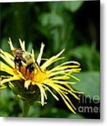 Summertime Bee Metal Print