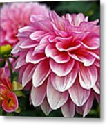 Summertime Blossoms Metal Print