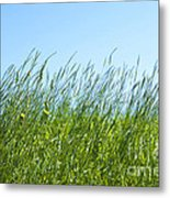 Summertime Grass Metal Print