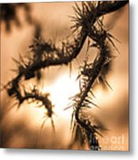 Sun And Frost Metal Print