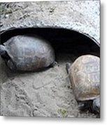 Sun Basking Turtles Metal Print