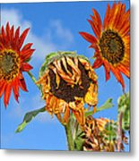 Sun Drenched In Autumn By Diana Sainz Metal Print