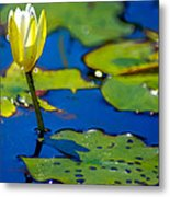 Sun Drenched Lilly  Metal Print