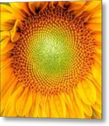 Sun Flower Power Metal Print