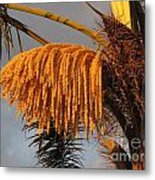 Sun Glowing Palm Metal Print