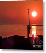Sun Gull Metal Print