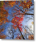Sun In Fall Forest Canopy  Metal Print