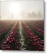 Sun In Fog And Tulips Metal Print