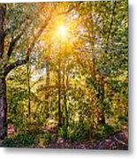 Sun In The Autumn Forest Metal Print