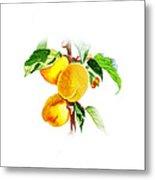 Sun Kissed Apricots Metal Print