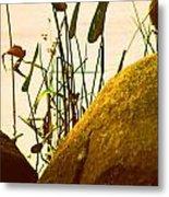 Sun Kissed Grass And Rocks   Metal Print