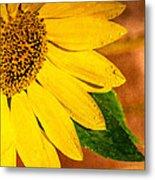 Sun-kissed Sunflower Metal Print