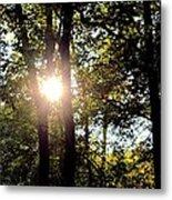 Sun Kissed Trees Metal Print