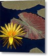 Sun-kissed Water Lily Metal Print