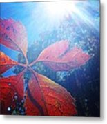 Sun Leaf Metal Print by Candice Trimble