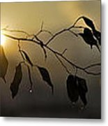 Sun Leaves Metal Print