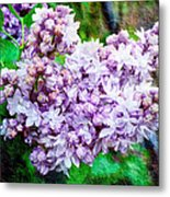 Sun Lit Lilac The Sweet Sign Of Spring Metal Print