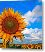 Sun On My Face Metal Print