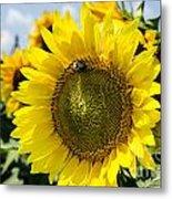 Sun On The Sunflower Metal Print