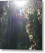 Sun Penetrates The Redwood Forest Metal Print
