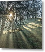 Sun Rays  On A Hillside Metal Print