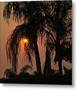 Sun Setting Behind The Queen Palm Covered In Smoke Metal Print