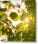 Sun Shining Through Leaves Metal Print