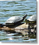 Sun Stretching Turtle And Youngster Metal Print