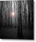 Sun Thru The Trees At Twilight Metal Print