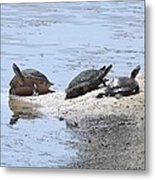 Sun Turtles Metal Print