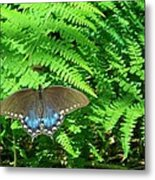 Sunbathing Butterfly Metal Print