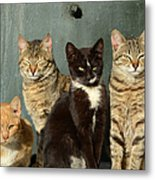 Sunbathing Cats Metal Print