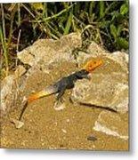 Sunbathing Lizard Metal Print