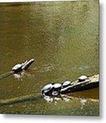 Sunbathing Turtles Metal Print